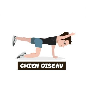 icone exercice chien oiseau